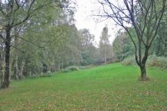Silver Birch site